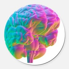 Human brain, computer artwork Round Car Magnet