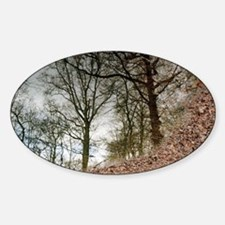 Trees reflected in a pool of water Sticker (Oval)