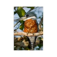 Ringed kingfisher Rectangle Magnet