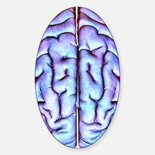 Human brain, artwork Decal