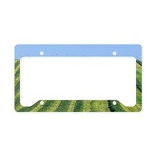 Tractor turning grass for sil License Plate Holder