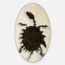 Tortoise fossil Decal