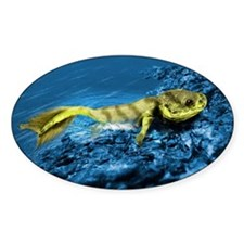 Tiktaalik prehistoric fish, artwork Decal