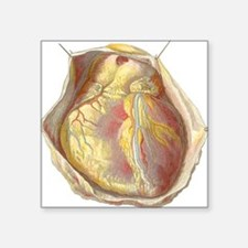 "Heart anatomy, artwork Square Sticker 3"" x 3"""
