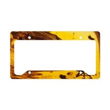 Termite in amber License Plate Holder