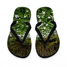 Ramsons (Allium ursinum) Flip Flops