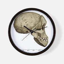 Taung Child skull Wall Clock