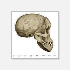 "Taung Child skull Square Sticker 3"" x 3"""