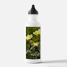 Pulsatilla alpina ssp. Water Bottle