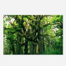 Temperate rainforest Postcards (Package of 8)