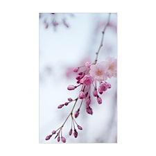 Prunus subhirtella 'Pendula' Decal