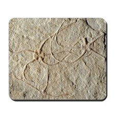 Prehistoric brittle star fossils Mousepad