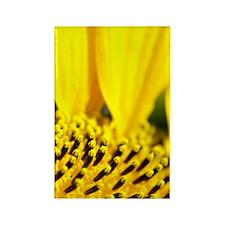 Sunflower Rectangle Magnet