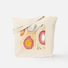 Hair follicles, light micrograph Tote Bag