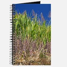 Sugar cane Journal
