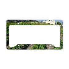 Potatoes growing in lazy beds License Plate Holder