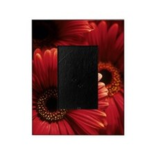 Gerbera flowers Picture Frame