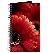 Gerbera flowers Journal