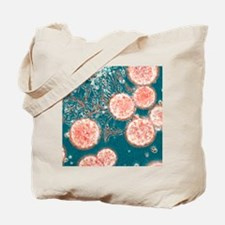 Stem cells, light micrograph Tote Bag
