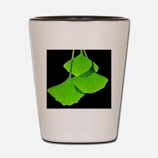 Ginkgo leaves, computer artwork Shot Glass