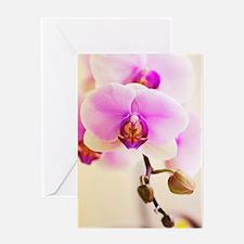 Phalaenopsis Hinamatsuri 'Blushing B Greeting Card
