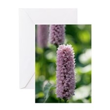Persicaria bistoria 'Superba' Greeting Card