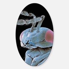 Parasitic wasp, SEM Decal