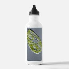 Paramecium protozoan,l Water Bottle