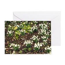 Snowdrops (Galanthus nivalis) Greeting Card