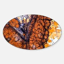 Fat tissue, light micrograph Decal
