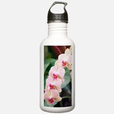 Orchid (Phalaenopsis s Water Bottle