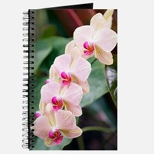 Orchid (Phalaenopsis sp.) Journal