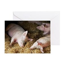 Sleeping pigs Greeting Card