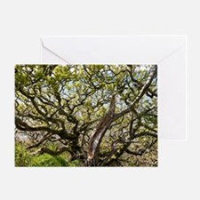 Oak tree (Quercus sp.) Greeting Card