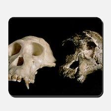 Skulls of A. africanus and a chimpanzee Mousepad
