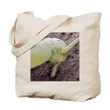 Silverfish, SEM Tote Bag