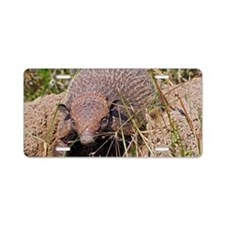 Six-banded armadillo Aluminum License Plate