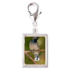 Seychelles sunbird Silver Portrait Charm