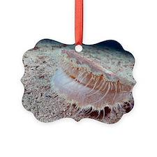 Scallop on the sea bed Ornament