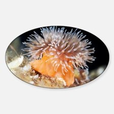 Sea anemone Decal