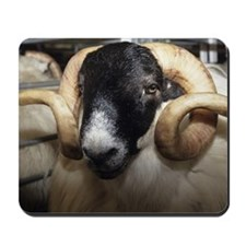 Scottish blackface ram Mousepad