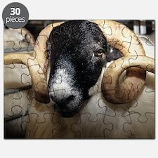 Scottish blackface ram Puzzle