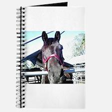 Tennessee walking horse Journal