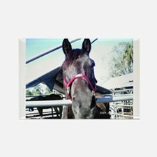 Cute Foxs delight twh tennessee walking horse kentucky Rectangle Magnet