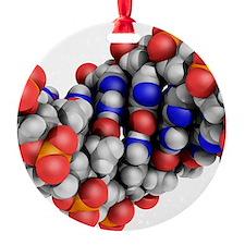 DNA molecule, artwork Ornament