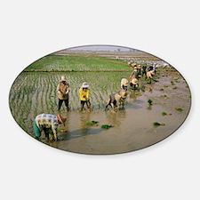 Rice farmers Decal