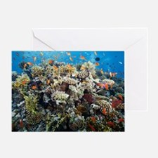 Reef scene Greeting Card