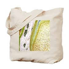 Developing tooth, light micrograph Tote Bag