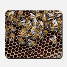 Queen bee with worker bees Mousepad