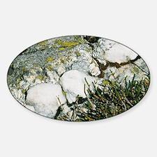 Quartzite rocks Decal